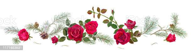 Panoramic view with red roses pine branches cones horizontal border vector id1171933531?b=1&k=6&m=1171933531&s=612x612&h=j tkmxtjqy121 hjpz4eppmiljfggtts34hrmlhtqvs=