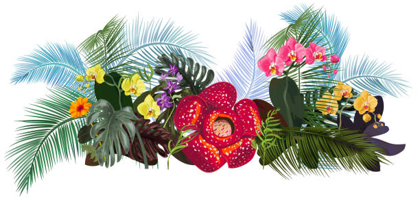 Flower White png download - 834*609 - Free Transparent Rafflesia Arnoldii  png Download. - CleanPNG / KissPNG