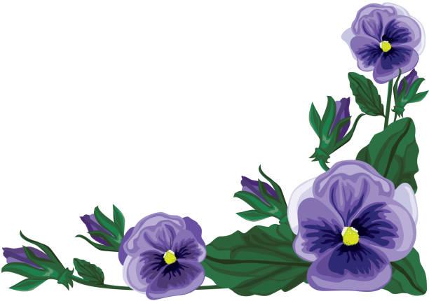 Pansy Floral Element, Purple vector art illustration