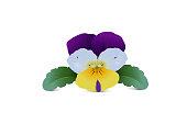 Pansy Violet Tricolor, Wild Pansies, Violaceae, Edible Flower,