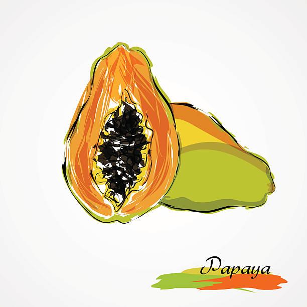 ilustrações, clipart, desenhos animados e ícones de mamão papaia - manaus