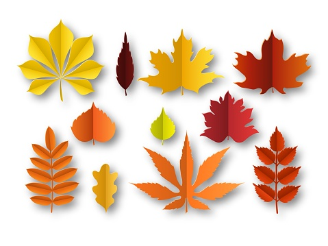 Paper autumn leaves. Beautiful fall colourful foliage. Orange, red and yellow papercut leaf decoration isolated vector elements
