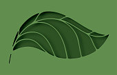 Paper elegant leaf hole layer cut abstract background. Ecology and environment conservation concept. Paper art style. Vector illustration.
