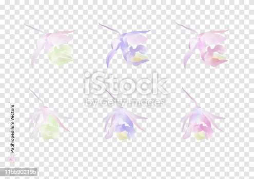 Paphiopedilum flowers vectors  with watercolor brush isolated on transparency background, beautiful floral element design for decoration