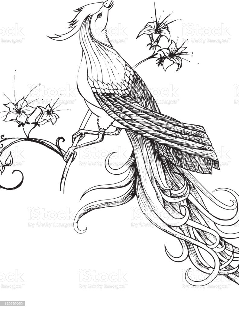 Paradise Bird On Flower Branch Stock Vector Art U0026 More Images Of Animal 165669052 | IStock