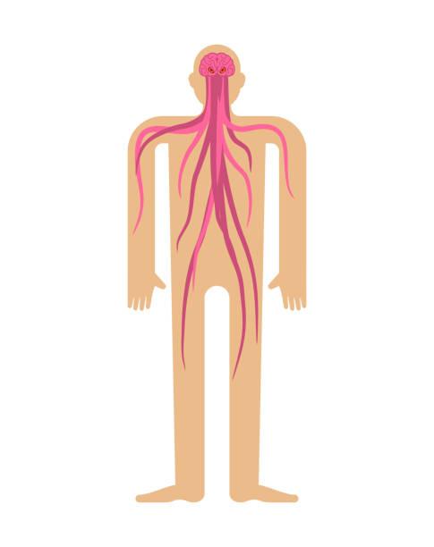 i̇nsan beyni parazit. beyin kafasında tentacles ile. bodyâ canavarın - naegleria fowleri stock illustrations