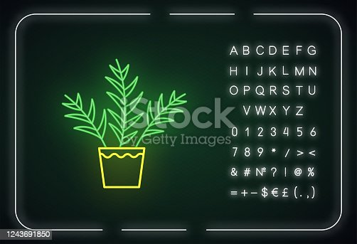 istock Parlor palm neon light icon. Chamaedorea elegans. Neanthe bella palm. Indoor tropical plant. Outer glowing effect. Sign with alphabet, numbers and symbols. Vector isolated RGB color illustration 1243691850