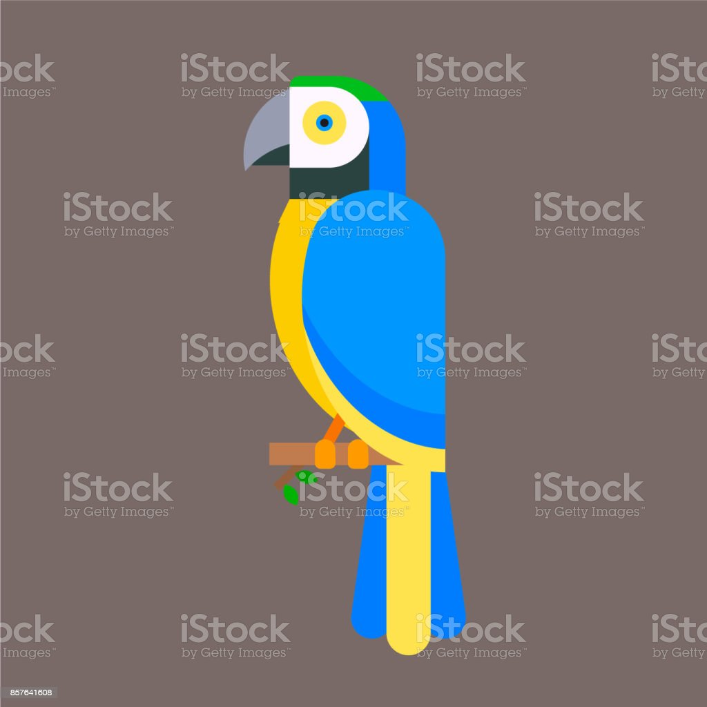 Parrot bird blue breed species and animal nature tropical parakeets...