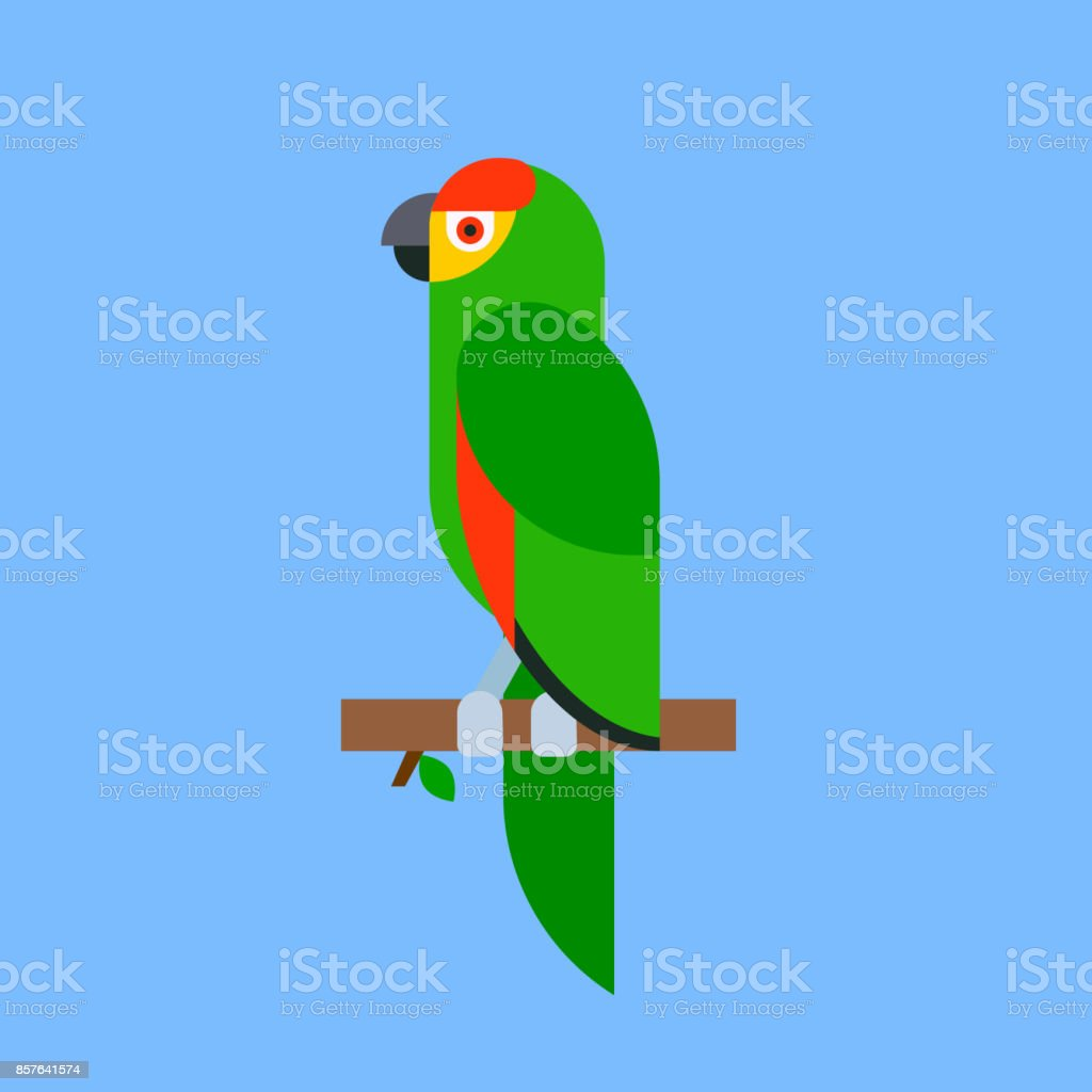 Parrot bird green breed species and animal nature tropical parakeets...