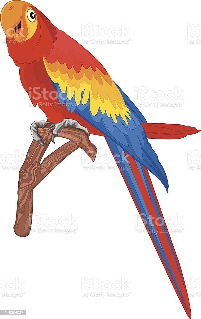 Parrot ii vector illustration