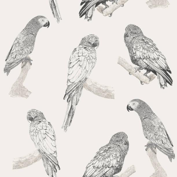 ilustrações de stock, clip art, desenhos animados e ícones de parrot seamless repeat pattern - arara