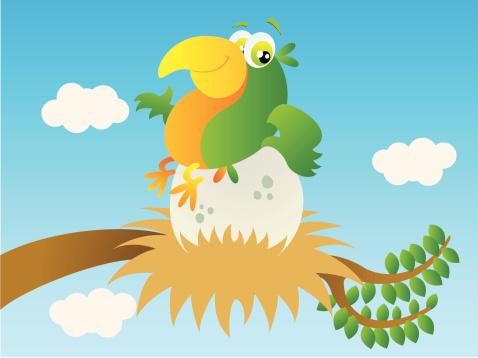Parrot sitting on egg