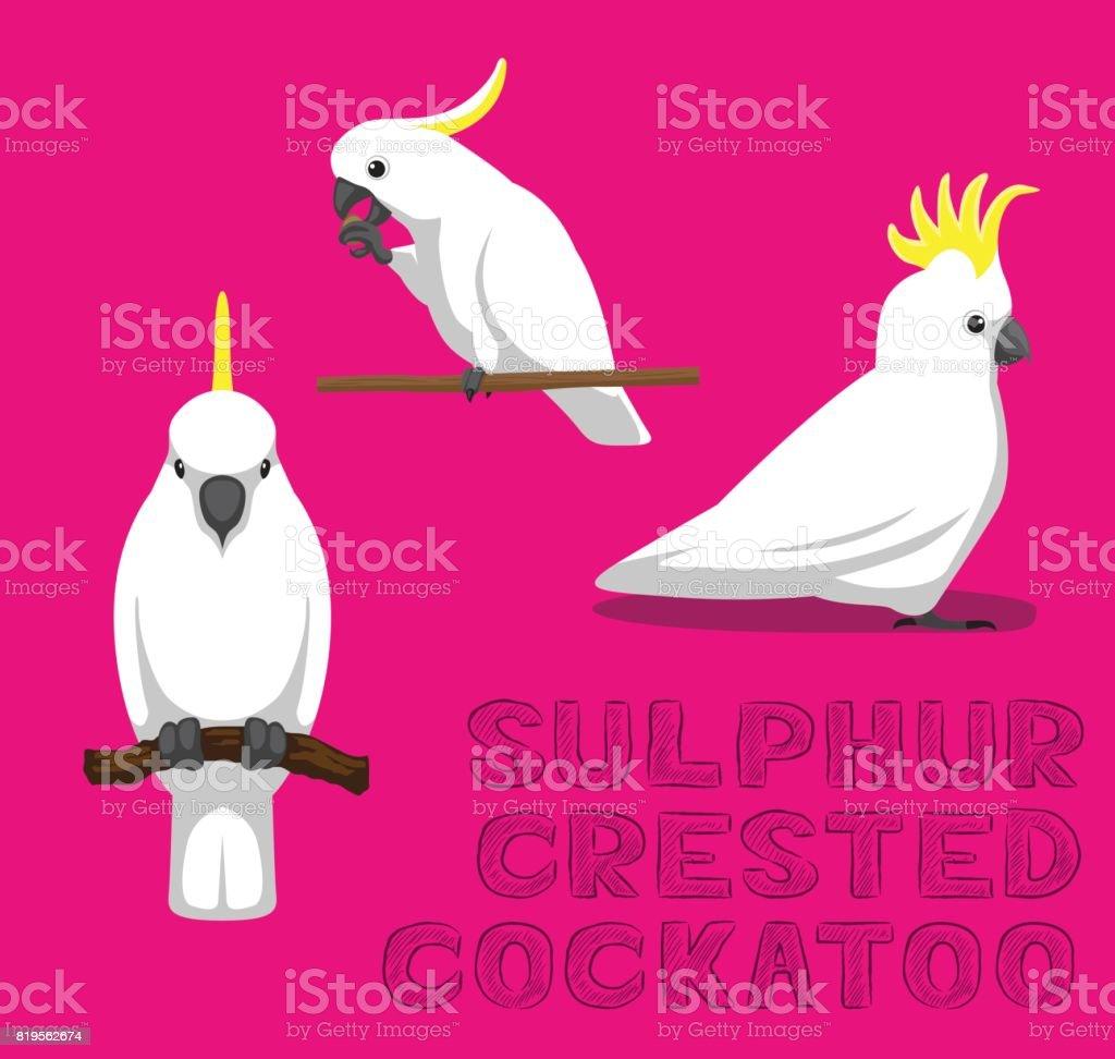 Parrot Sulphur-Crested Cockatoo Cartoon Vector Illustration vector art illustration