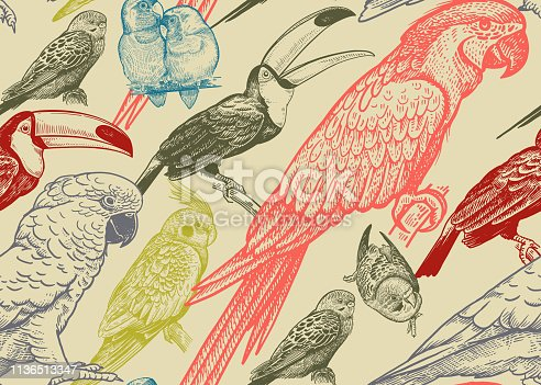 Tropical birds. Parrots and toucans. Seamless vector background. Wildlife pattern. Retro vintage. Old engraving style. Pattern for paper, wallpaper, textile, Hawaiian shirts. Color ornament.