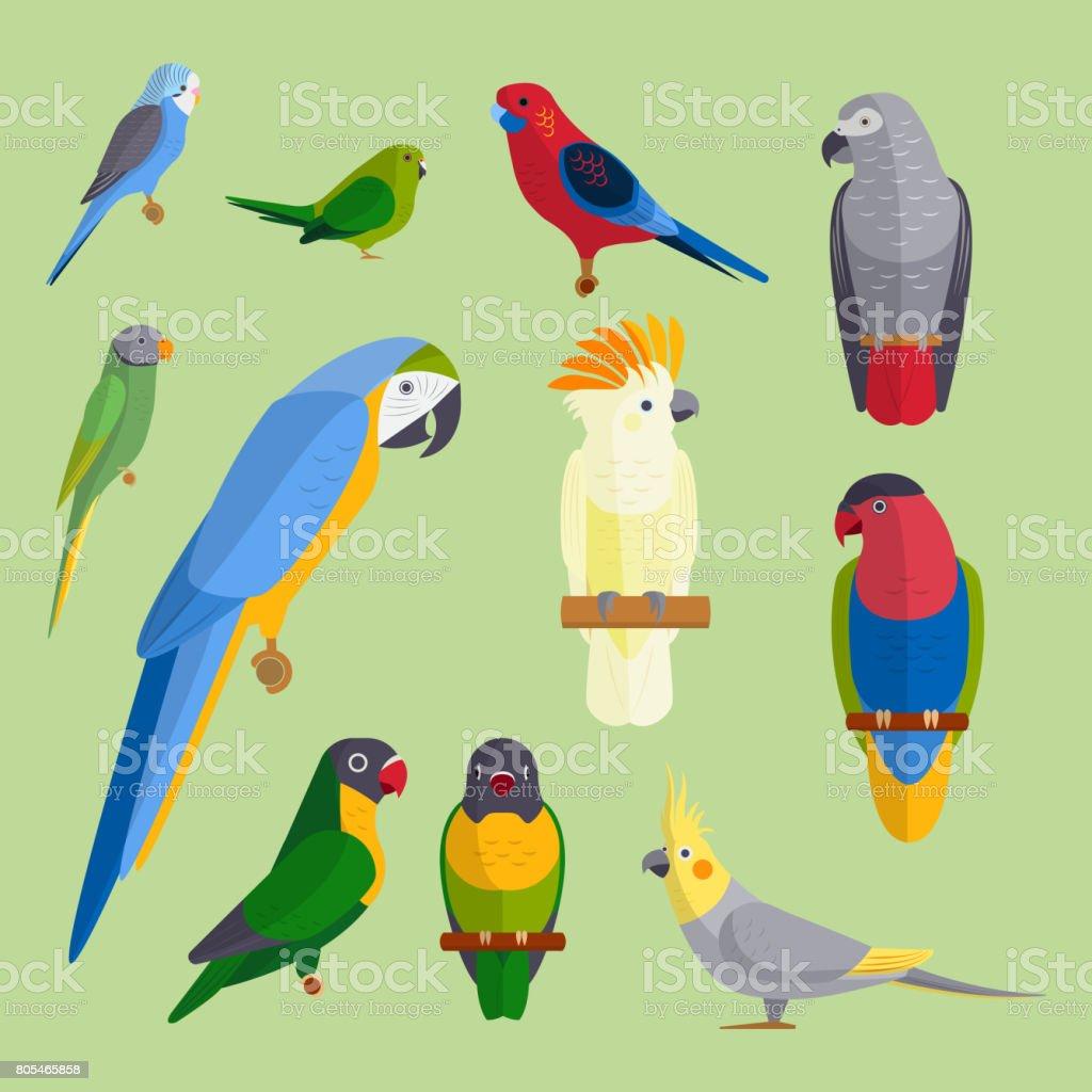 オウムの鳥繁殖種動物の性質熱帯のインコ教育カラフルなペット