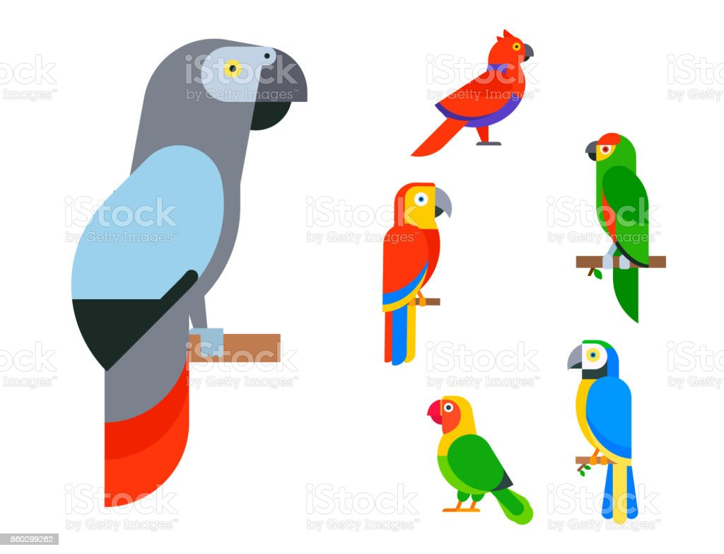 Parrots birds breed species and animal nature tropical parakeets...