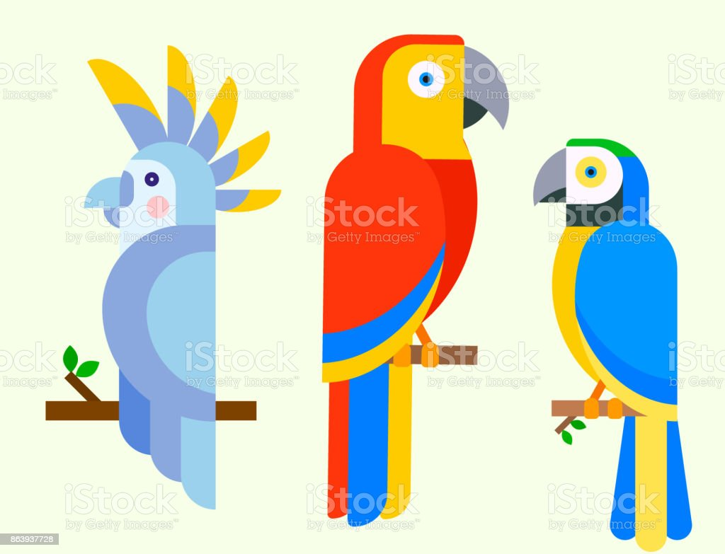 Parrots birds breed species animal nature tropical parakeets education colorful pet vector illustration royalty-free parrots birds breed species animal nature tropical parakeets education colorful pet vector illustration stock illustration - download image now