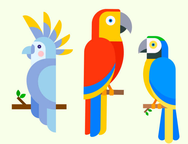 ilustrações de stock, clip art, desenhos animados e ícones de parrots birds breed species animal nature tropical parakeets education colorful pet vector illustration - arara