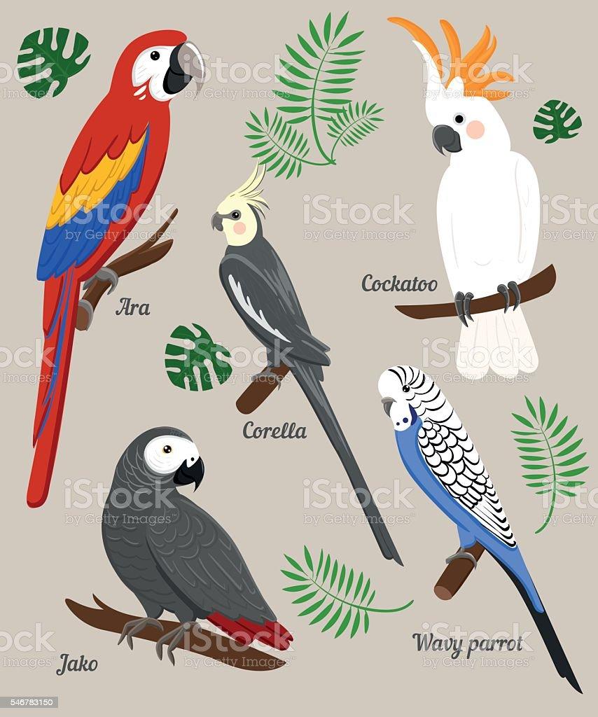 Parrots Cartoon Vector Illustration. Parrot set Exotic birds vector art illustration