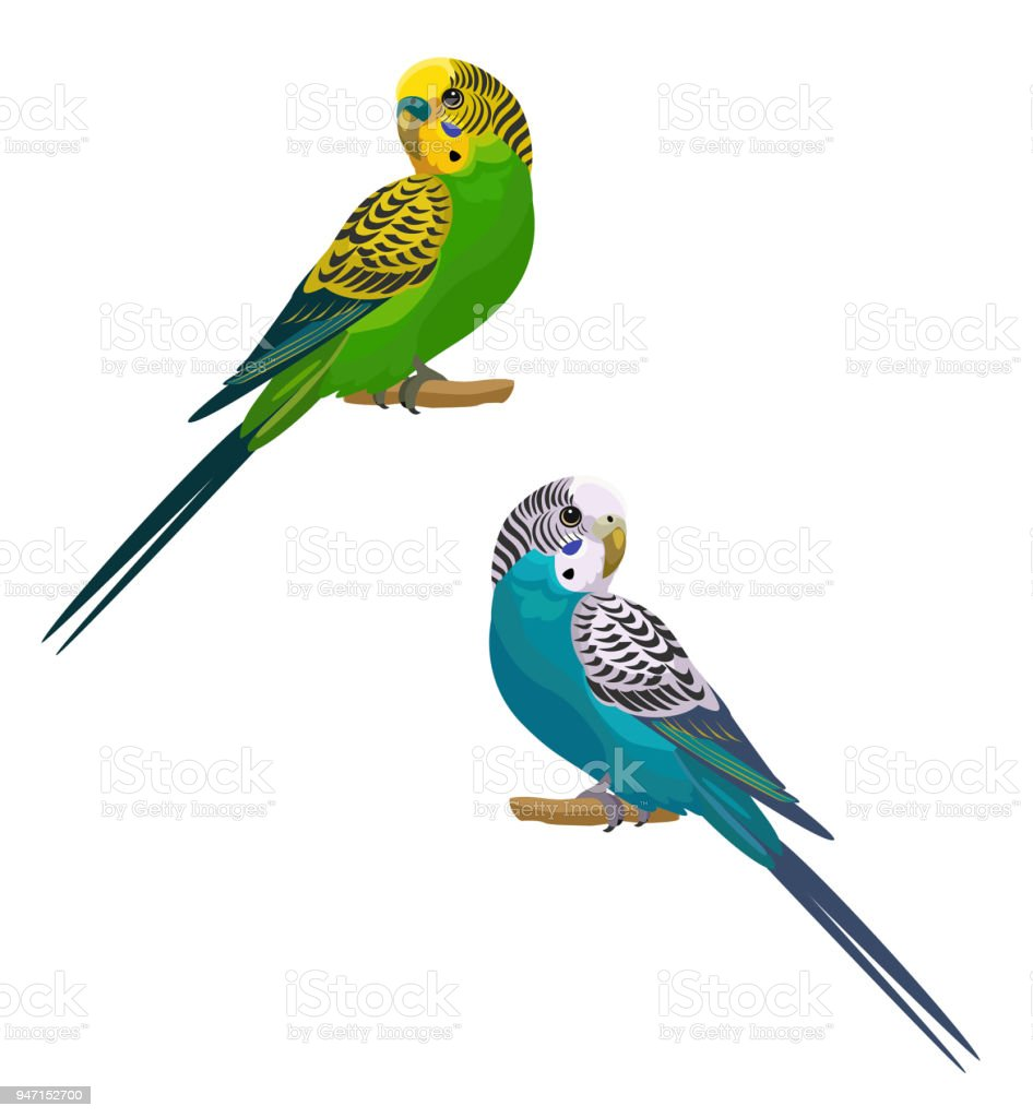 Parrots isolated on white background. Vector illustration. vector art illustration