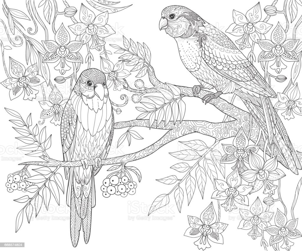 Parrots Sit On A Branch In The Jungle Adult Coloring Book Page