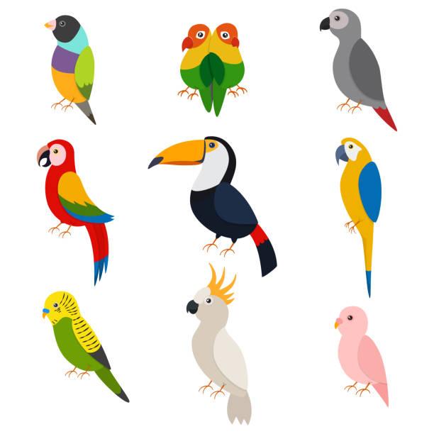 ilustrações de stock, clip art, desenhos animados e ícones de parrots vector cartoon set: macaw, toucan, green parrot, lovebirds, cockatoos, ara, budgie and other. flat icons of exotic birds isolated on white background. - arara