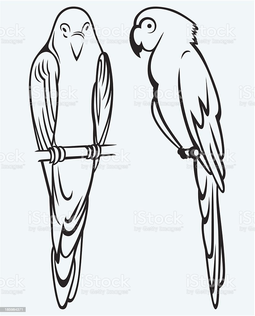 Parrots royalty-free stock vector art