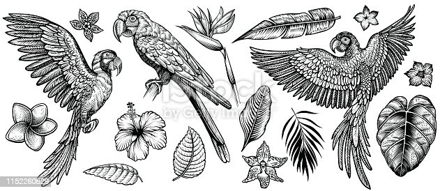 Parrots with tropical flowers, hand drawn line vector collection. Macaw flying parrot and sitting ara. Paradise exotic flowers and leaves. Engraving art design, isolated elements on white background.