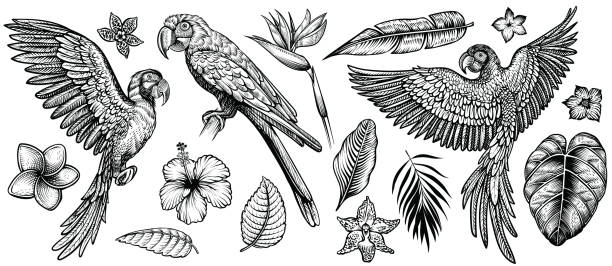 Parrots with tropical flowers and leaves, hand drawn line vector collection.. Parrots with tropical flowers, hand drawn line vector collection. Macaw flying parrot and sitting ara. Paradise exotic flowers and leaves. Engraving art design, isolated elements on white background. frangipani stock illustrations