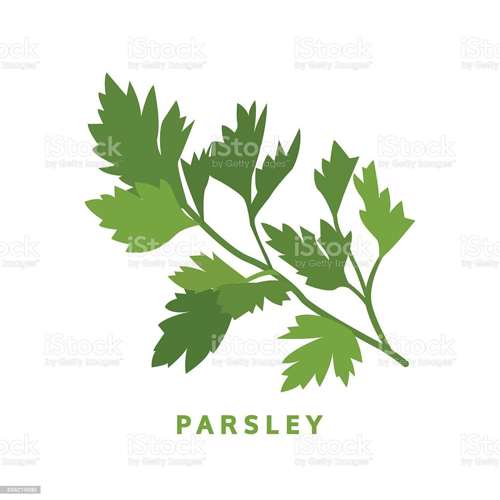 parsley herb, food vector illustration, isolated logo vector art illustration