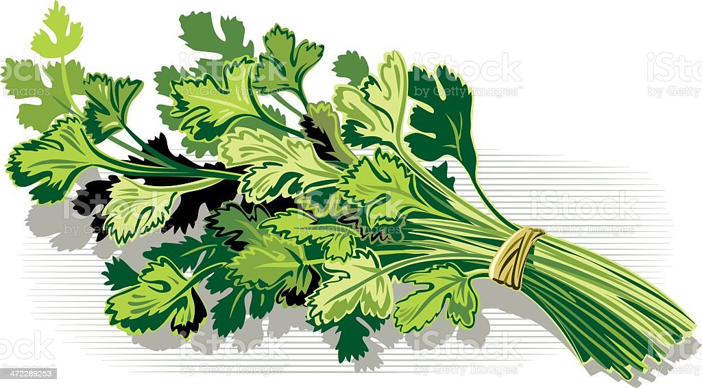 parsley royalty-free parsley stock vector art & more images of art product
