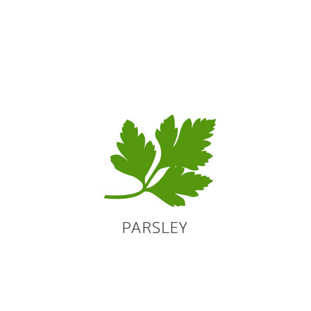 Parsley Vector illustration Parsley. Green healthy parsley isolated over white background Vector illustration garnish stock illustrations