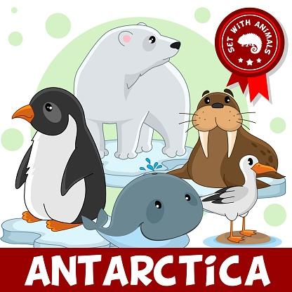 3 부분입니다 남극 대륙의 동물 갈매기에 대한 스톡 벡터 아트 및 기타 이미지