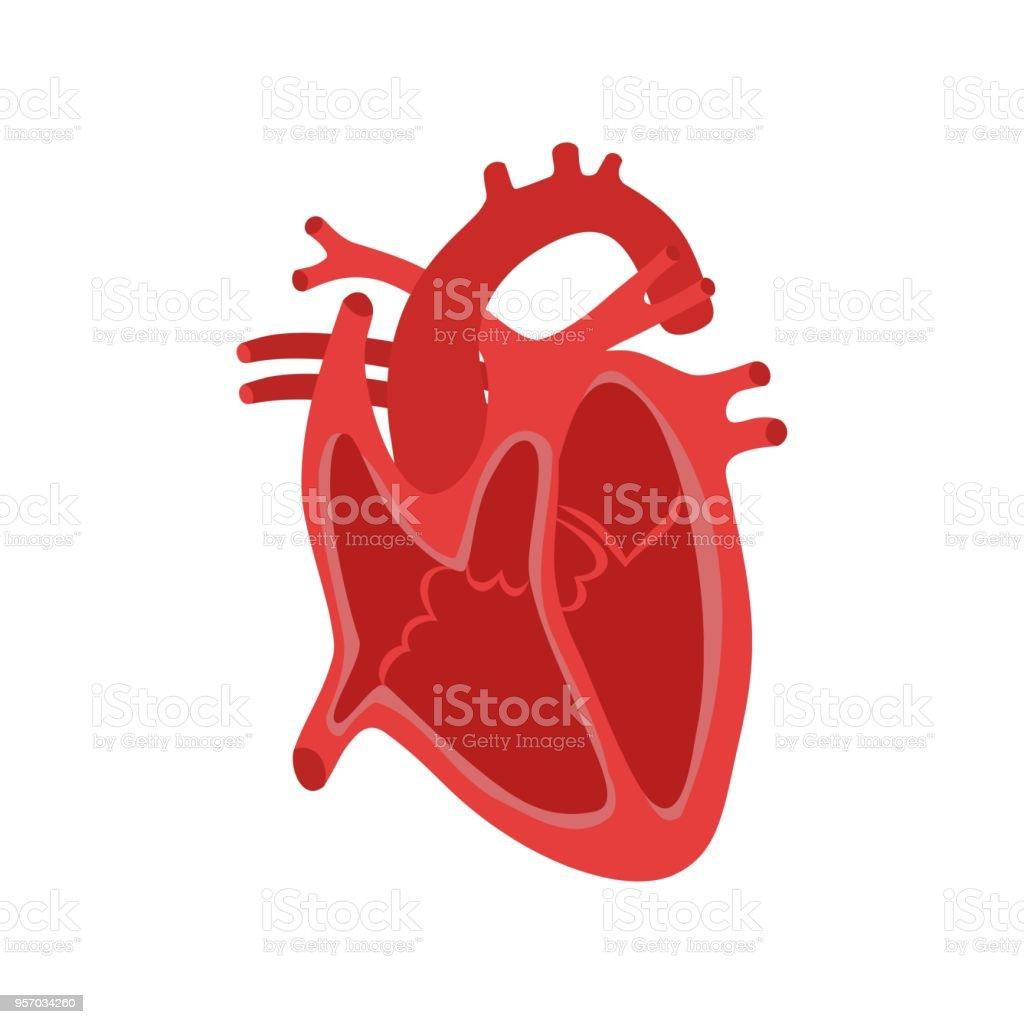 Tolle Bild Des Menschlichen Herzens Anatomie Galerie - Physiologie ...