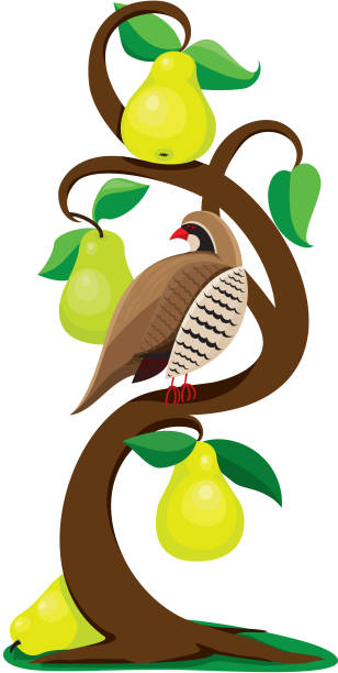 Royalty Free Partridge In A Pear Tree Clip Art, Vector ...