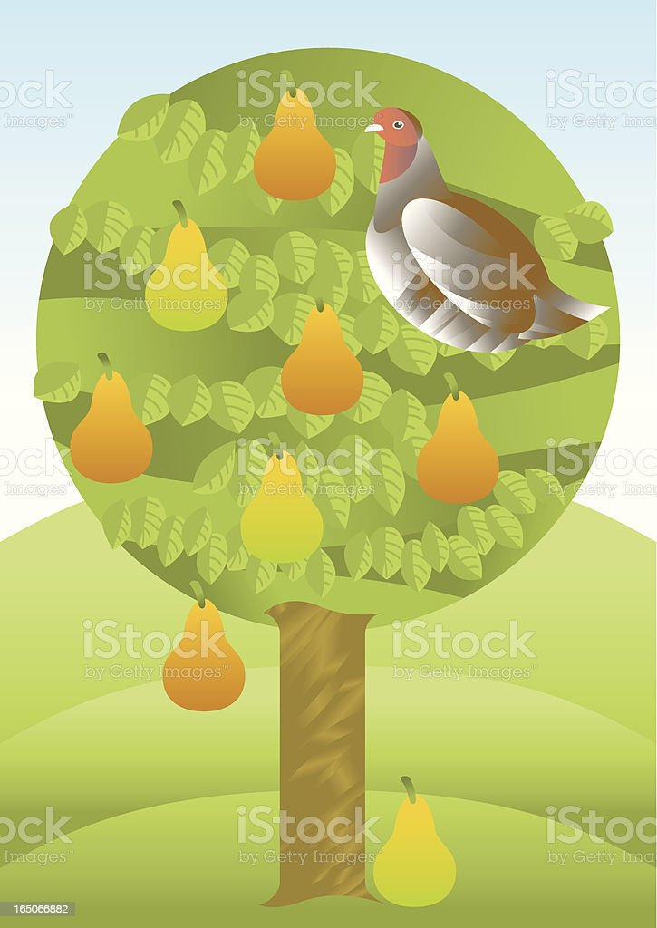 Partridge in a pear tree royalty-free partridge in a pear tree stock vector art & more images of concepts
