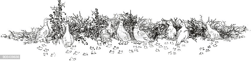 Vector picture of polar white partridges during winter time for feeding.