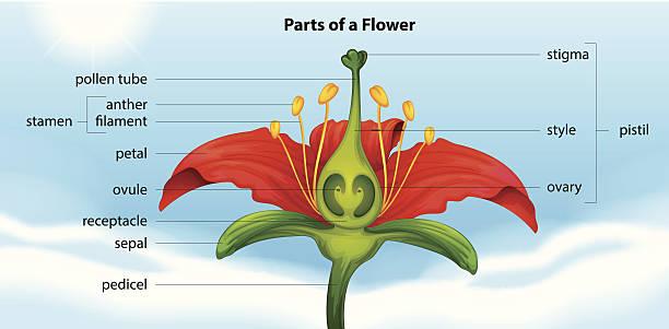 부품 꽃 - 꽃밥 stock illustrations