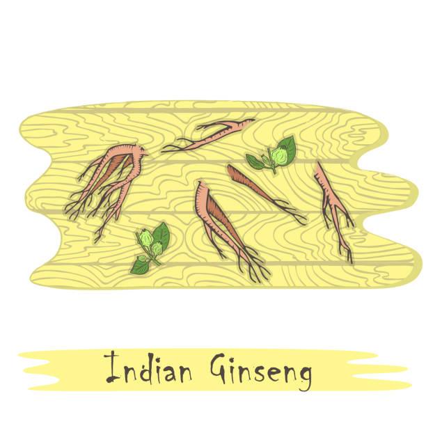 teile der kräuterpflanze indischer ginseng auf dem schneidebrett - schlafbeere stock-grafiken, -clipart, -cartoons und -symbole
