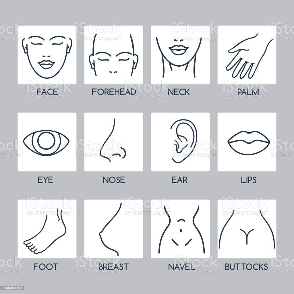 Parts of human body icons vector art illustration