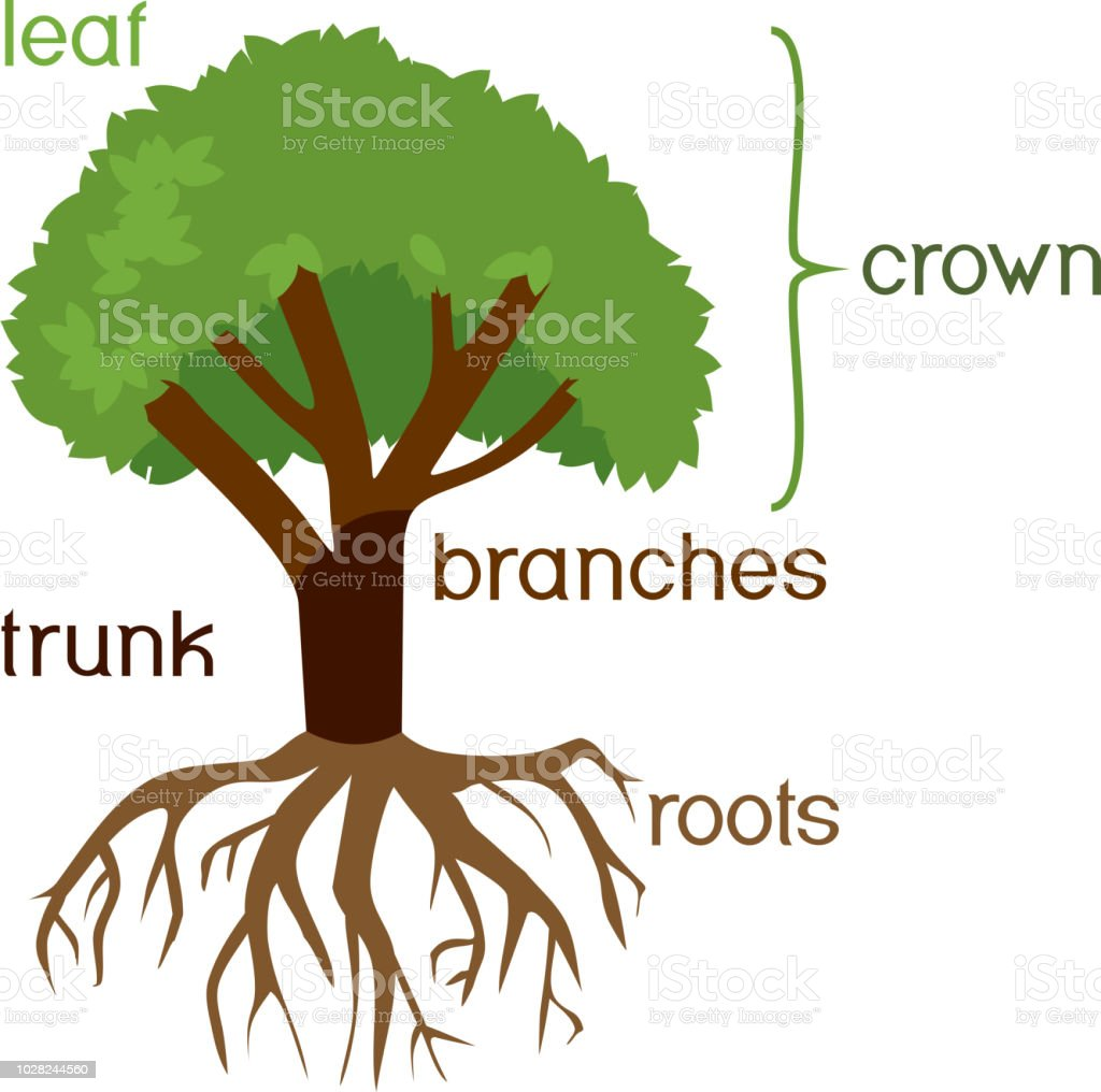 parts of plant morphology of tree with green crown root system and titles stock illustration