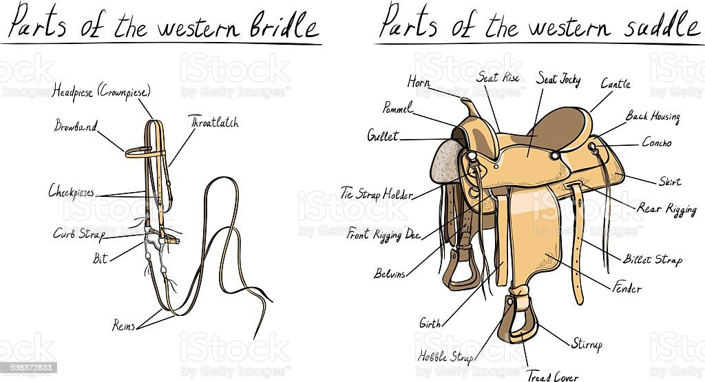 parts of western saddle and bridle horse tack vector id538372833 parts of western saddle and bridle horse tack stock vector art