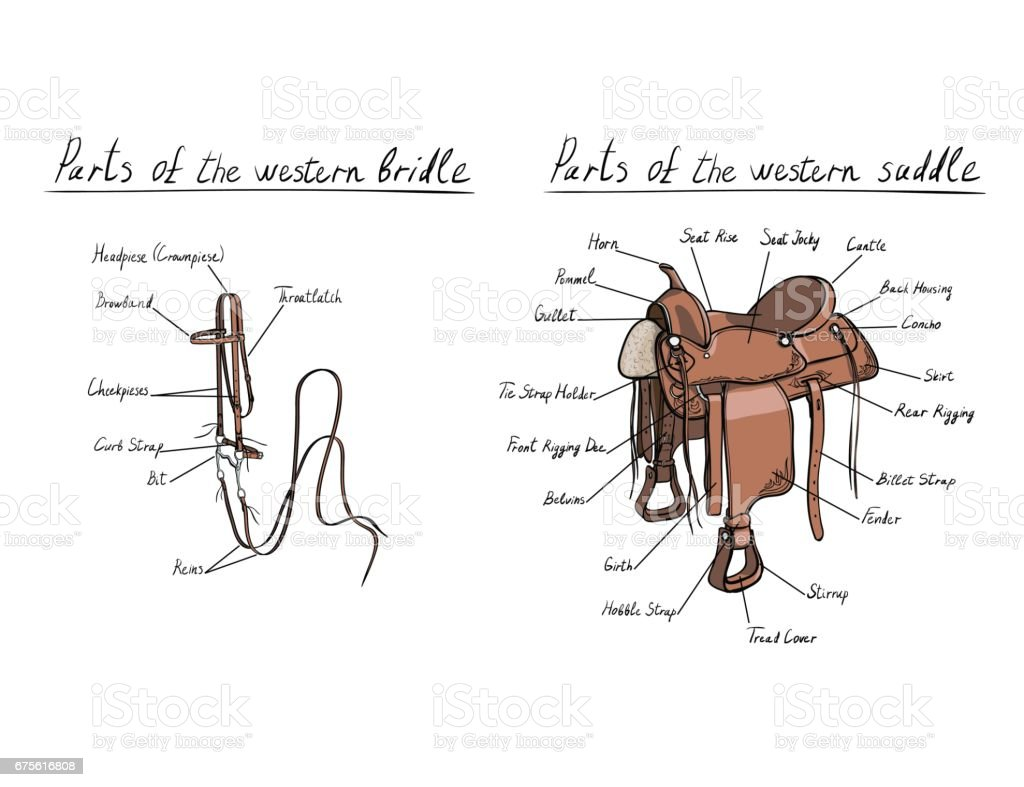 bridle saddle diagrams explore schematic wiring diagram u2022 rh webwiringdiagram today