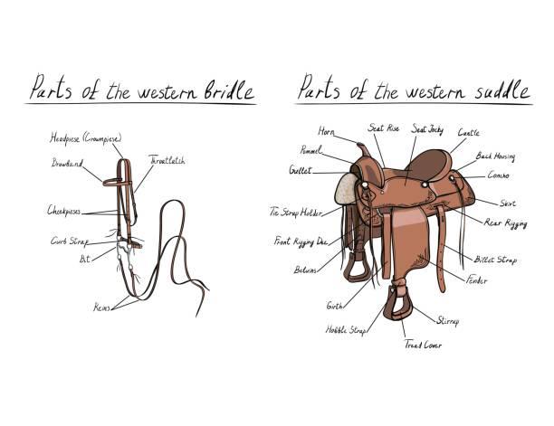 teile des westlichen sattel und zaumzeug mit textbeschreibung briefe. pferdenheftzwecke. - reiter stock-grafiken, -clipart, -cartoons und -symbole
