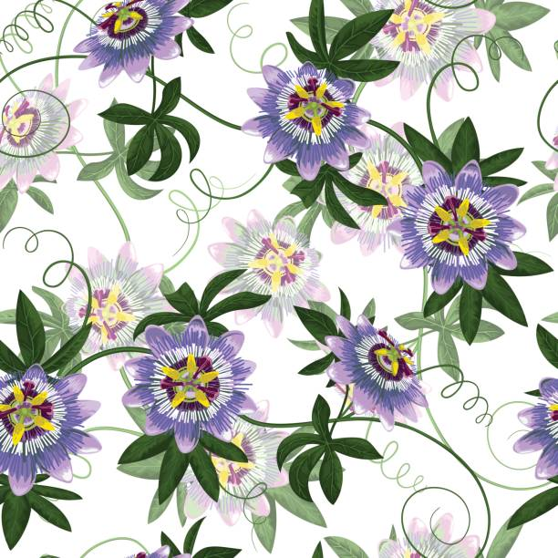 illustrazioni stock, clip art, cartoni animati e icone di tendenza di passiflora seamless pattern - passiflora
