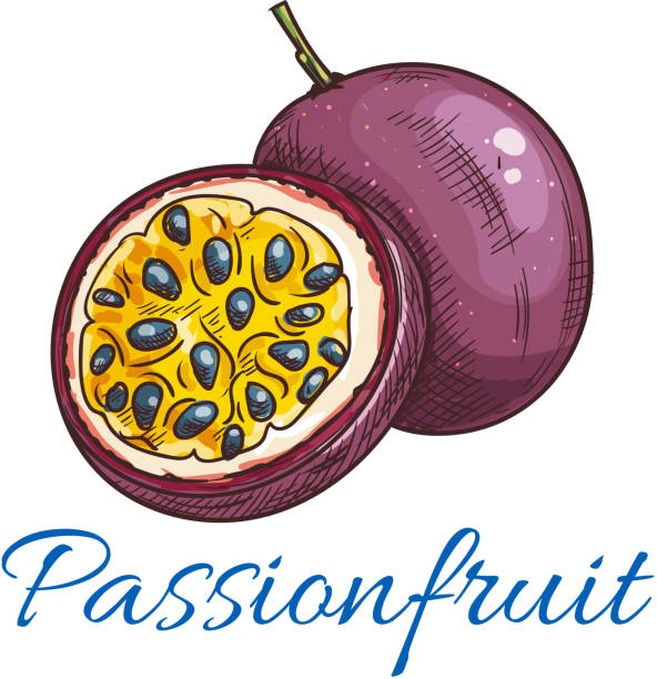 illustrazioni stock, clip art, cartoni animati e icone di tendenza di passion fruit vector color sketch icon - passiflora