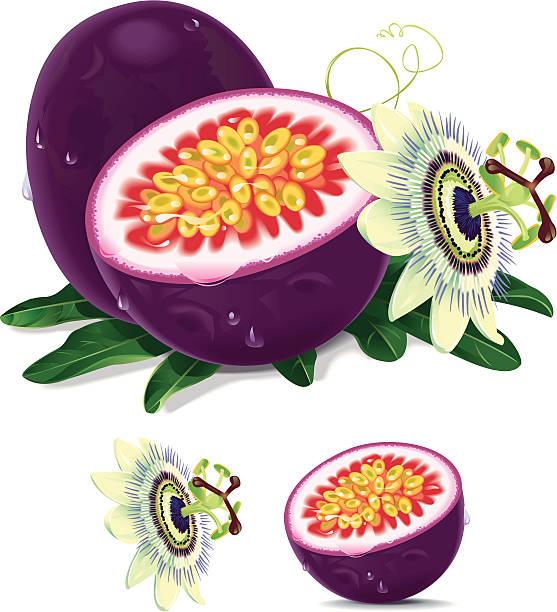 illustrations, cliparts, dessins animés et icônes de fruit de la passion - fruit de la passion