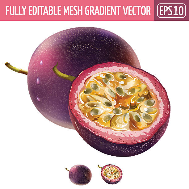 illustrazioni stock, clip art, cartoni animati e icone di tendenza di passionfruit on white background. vector illustration - passiflora