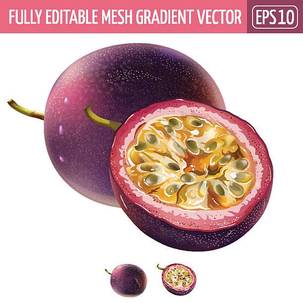 illustrations, cliparts, dessins animés et icônes de passionfruit on white background. vector illustration - fruit de la passion