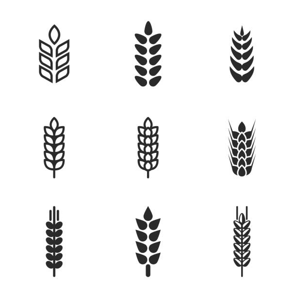 passport control inspector Wheat vector icons. Simple illustration set of 9 wheat elements, editable icons, can be used in logo, UI and web design cereal plant stock illustrations
